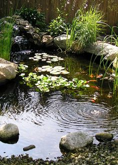 goldfish pond❤•♥.•:*´¨`*:•♥•❤love the plants planted in the rocks