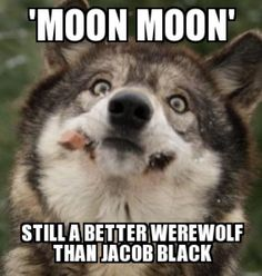 Moon Moon Wolf Funny   Moon-Moon Meme   Procrasturbation: To waste time pleasuring oneself