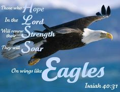Isaiah – But those who wait on the LORD shall renew their strength; They shall mount up with wings like eagles; they shall run and not be weary, They shall walk and not faint. Strength Bible Quotes, Biblical Quotes, Bible Verses Quotes, Bible Scriptures, Today's Scripture, Prayer Quotes, Eagle Pictures, Wings Like Eagles, Life Verses