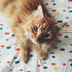 """#cat #kitty #kitdung #catsofinstagram"""
