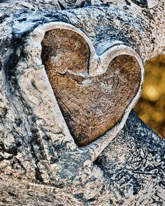 Heart Shaped Knothole by Amit Zand