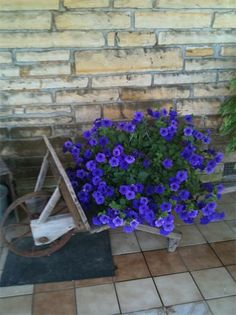 Old Wheel barrow and beautiful flowers