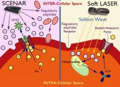 Cellular Healing with SCENAR and Soft LASER