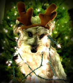 Christmas card worthy photo