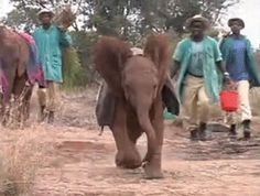 These baby elephants can fix even the worst morning