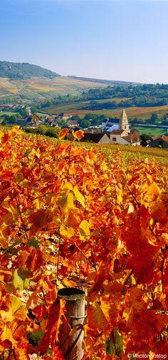 Vignes à côté du village de St Aubin, Bourgogne