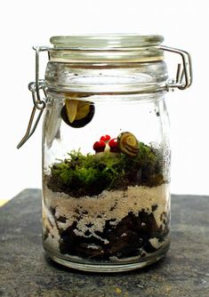 Making your own DIY terrarium is both fun and easy. Suited for any skill level, these cute terrariums make lovely home accents as well as thoughtful homemade gift ideas.