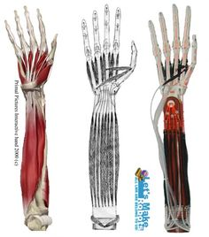 pneumatic muscle - Google Search