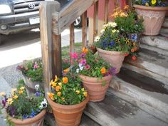 beautiful pot plants where I had dinner in Crested Butte