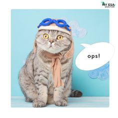 It's okay to make mistakes, It's okay to be wrong sometimes. It's okay to forgive and forget. #fursona #happycats #cats_of_day #cat_imatges #myesadoctor #esa #pleasantcats #catsofgram #meowsandwoofs #funpetloveclub #ig_catclub #catstocker #bestphotogram_dogs #pawproject #my_loving_pet #magnificent_meowdels #ic_animals #a_world_of_cats #elegant_cats #igclubcats #catsygram #best_cats #cutest_meow #wildlife_seekers #furrendsupclose #splendid_animals