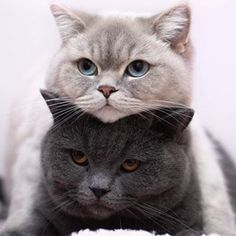 133 grafik o animals w We Heart It Cute Kittens, Cats And Kittens, Baby Animals, Funny Animals, Cute Animals, I Love Cats, Crazy Cats, Newborn Kittens, Unique Cats