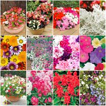 Extra Value Plug Plants - Collection - Offers - Gardening - Suttons Seeds and Plants Bright Bedding, Sutton Seeds, Plants, Gardens, Collection, Color, Planters, Colour, Plant
