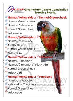 Green-cheek Conure Combination Breeding Results.