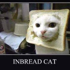 Love the pet humor
