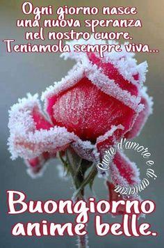 397 Fantastiche Immagini Su Buongiorno Good Morning Bonjour E