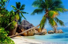Seychelles Islands, Outdoor Furniture, Outdoor Decor, Hammock, Chartreuse, Home Decor, Paintings, Nautical Painting, Painted Canvas