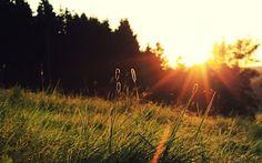 i love morning sun