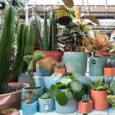 Cacti And Succulents, Cactus Plants, Concrete Planters, Planter Pots, Stall Display, Green Rooms, Plant Decor, Houseplants, Fails
