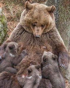 Foto. A mis brazos hijos míos