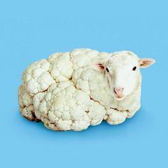 sheep / cauliflower / digital art / photoshop illustration / blue and white Photomontage, Photo Illusion, Creative Photography, Art Photography, Exposure Photography, Levitation Photography, Visual Puns, Surreal Artwork, Montage Photo