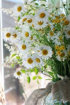 ✿ڿڰۣ   Daisies are such friendly, cheerful flowers