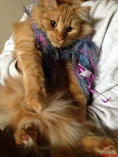 Dress For The Weather - http://cutecatshq.com/cats/dress-for-the-weather/
