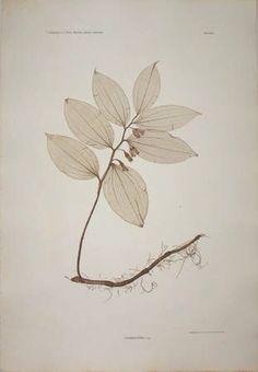 hearthside-reader: plant print  georgeglazer.com
