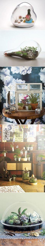 DIY Tabletop Terrariums