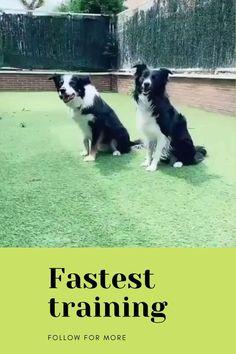 Training Your Dog, Dogs, Animals, Animales, Animaux, Pet Dogs, Doggies, Animal, Animais