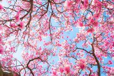 spring =)