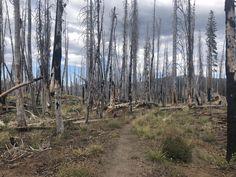 Leselaunen / Wochenrückblick   #Leselaunen #PCTHike #Urlaub #Wochenrückblick #Waldbrand #USA #Reisen #Natur Pacific Crest Trail, Crater Lake, Chester, Sacramento, Portland, Der Bus, Mountains, Usa, Nature