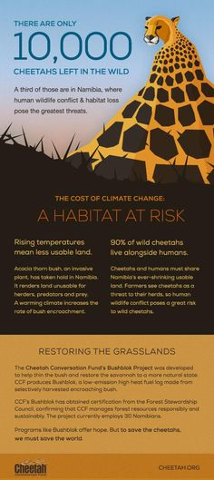 The Cost Of Climate Change ~ A Habitat At Risk | Cheetah Conservation Fund.