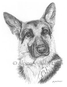 german shepherd sketch | Alpine Animal Art - Large Dog Gallery