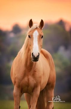 Early morning horse portrait.