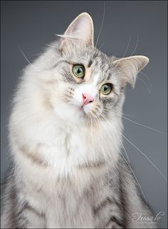 """""""Cats possess numerous charms, and anyone who has ever loved a cat has fallen for its magic."""" --Susan Easterly"""