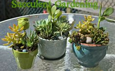 http://beingalison.com/making-your-own-succulent-garden-dihworkshop/comment-page-12#comment-191953