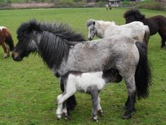 Meet Lilly May One very cute shetland pony filly foal