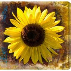 """Gallery Direct """"Sunflower"""" by Sia Aryai Painting Print on Wrapped Canvas Size: 48"""" H x 48"""" W"""