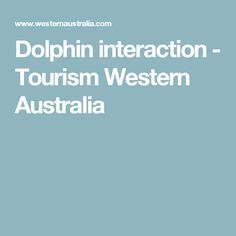 Dolphin interaction - Tourism Western Australia