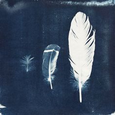 I have always picked up feathers  I like to think it was a way of my parents telling me they were near