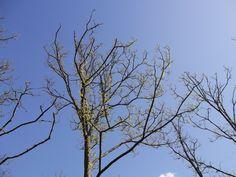 Spring sky 2