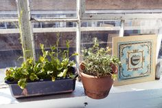 Holly Wales and Stephen Smith – Artists and Illustrators at Home in London « the selby London People, Bohemian Interior, Dalai Lama, Creative People, Herb Garden, Interior Inspiration, Illustrators, Planter Pots, Gallery