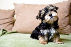 The Best Way to Ditch Pet Hair That You've Never Tried