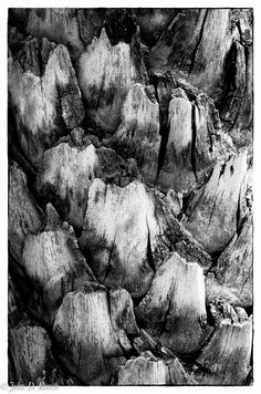 Nature's Abstract by John Roach White Photography, Black And White, Abstract, Nature, Summary, Naturaleza, Black N White, Black White, Nature Illustration