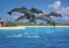 Sea Life Park Dolphin Cove Show