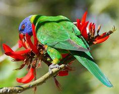 amazing colours!