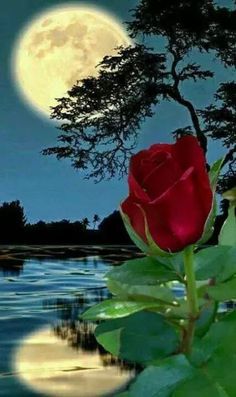 Thank God for your goodness, look at this beauty - Flores Beautiful Night Images, Beautiful Nature Pictures, Beautiful Moon, Beautiful Roses, Beautiful Landscapes, Moon Images, Small Greenhouse, Flower Phone Wallpaper, Good Night Image