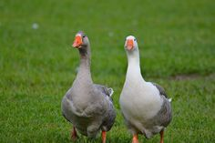 goose around and spend time
