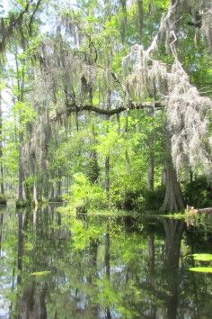 Francis Marion National Forest in Huger South Carolina.  It begs to be explored.