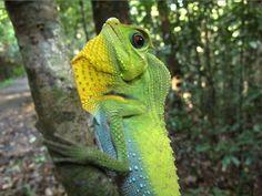 ¿Cuántos parques nacionales encuentras en Sri Lanka? ¿Qué verás en cada uno de ellos? #sinharaja #srilanka #fauna